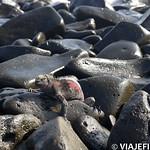 Viajefilos en La Espanola, Galapagos 014