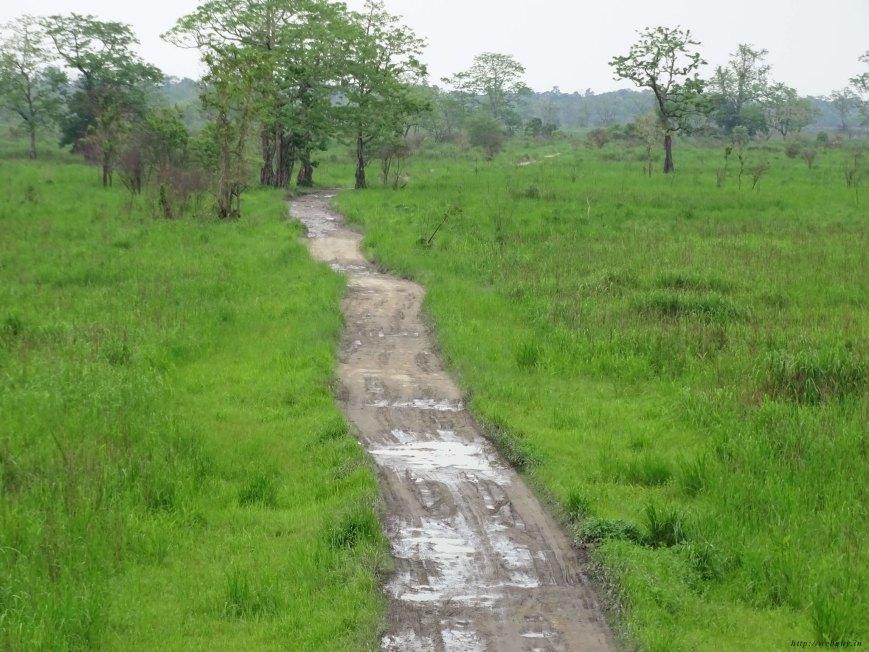 The Lure of The Jungle, Kaziranga