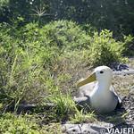 Viajefilos en La Espanola, Galapagos 023