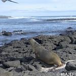 Viajefilos en San Cristobal, Galapagos 048