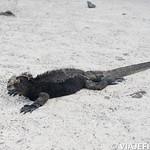 Viajefilos en San Cristobal, Galapagos 050