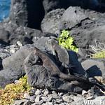 Viajefilos en La Espanola, Galapagos 029