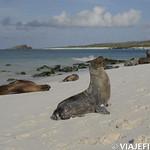 Viajefilos en La Espanola, Galapagos 080