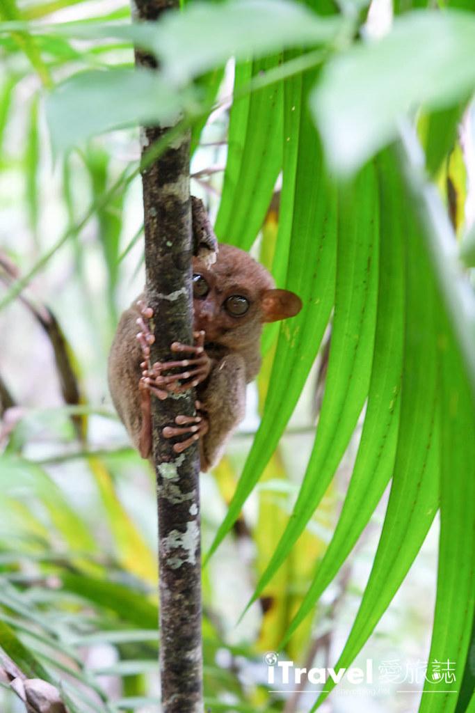 菲律宾薄荷岛眼镜猴保育中心 Tarsier Sanctuary (13)