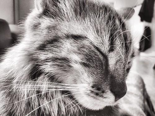 #cat #pictures #SW #blackandwhite