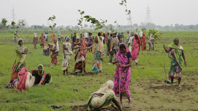 0001India-Plants-Trees-Guinness-World-Record-1