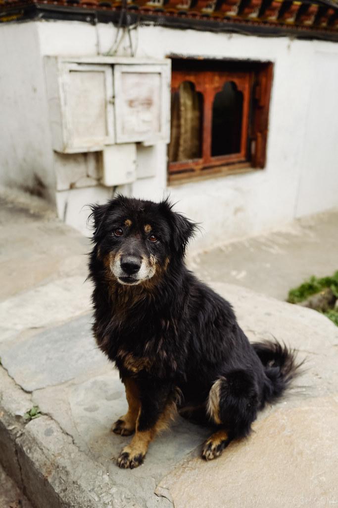 Sketch-Bhutan-Drukasia-Travel-122
