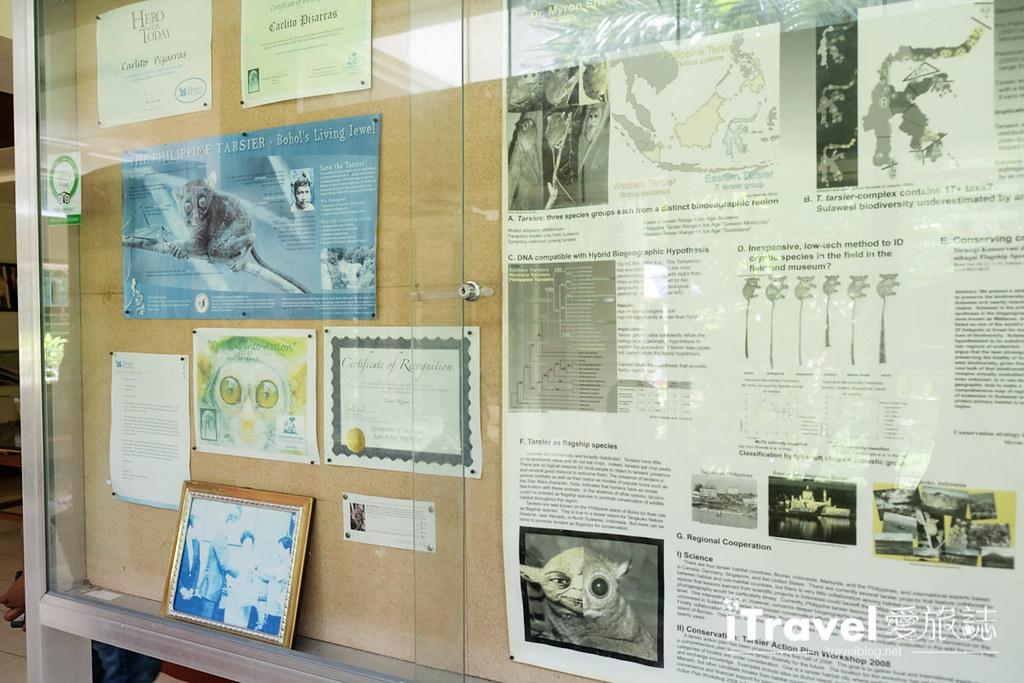 菲律宾薄荷岛眼镜猴保育中心 Tarsier Sanctuary (6)