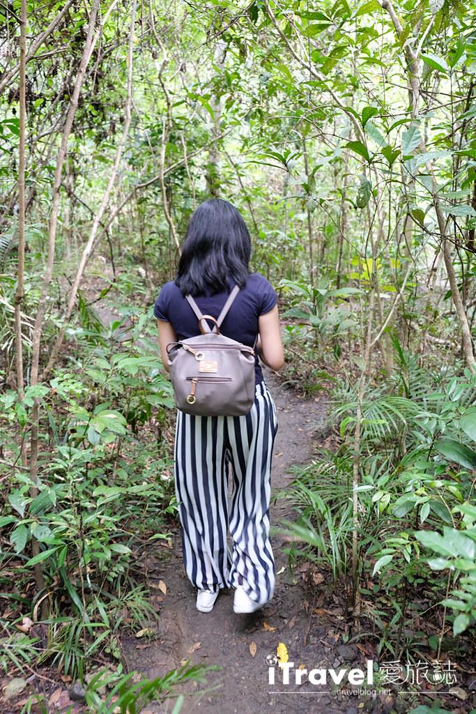 菲律宾薄荷岛眼镜猴保育中心 Tarsier Sanctuary (17)