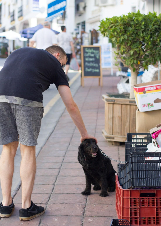 Friendly dog in Competa