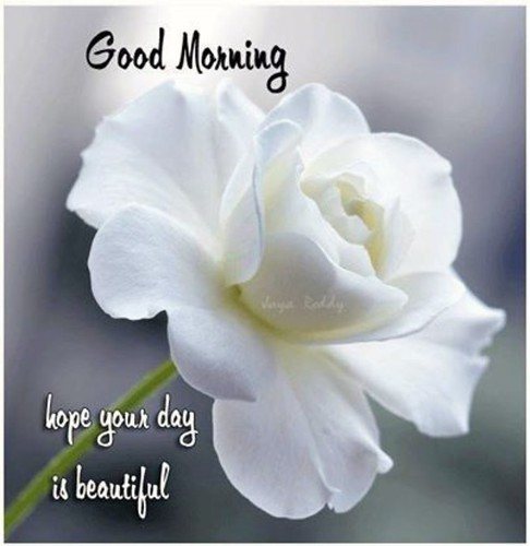 #LotionBars #Organic #Natural #NoMess #Skincare #Soap #TheLotionBar #BathBombs #Lavender #Jasmine #Exfoliating #EssentialOils #Love #BirthBabyandBeyond #Me #Pregnancy #BabyBump #Mothers #Smooth #Lotion #HerbalCare #GiftBoxes #Travel #TSASafe #Flowers #Mas