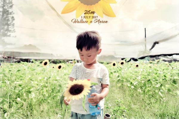 ღ幸福的日子ღ: 26M‧信芯園向日葵