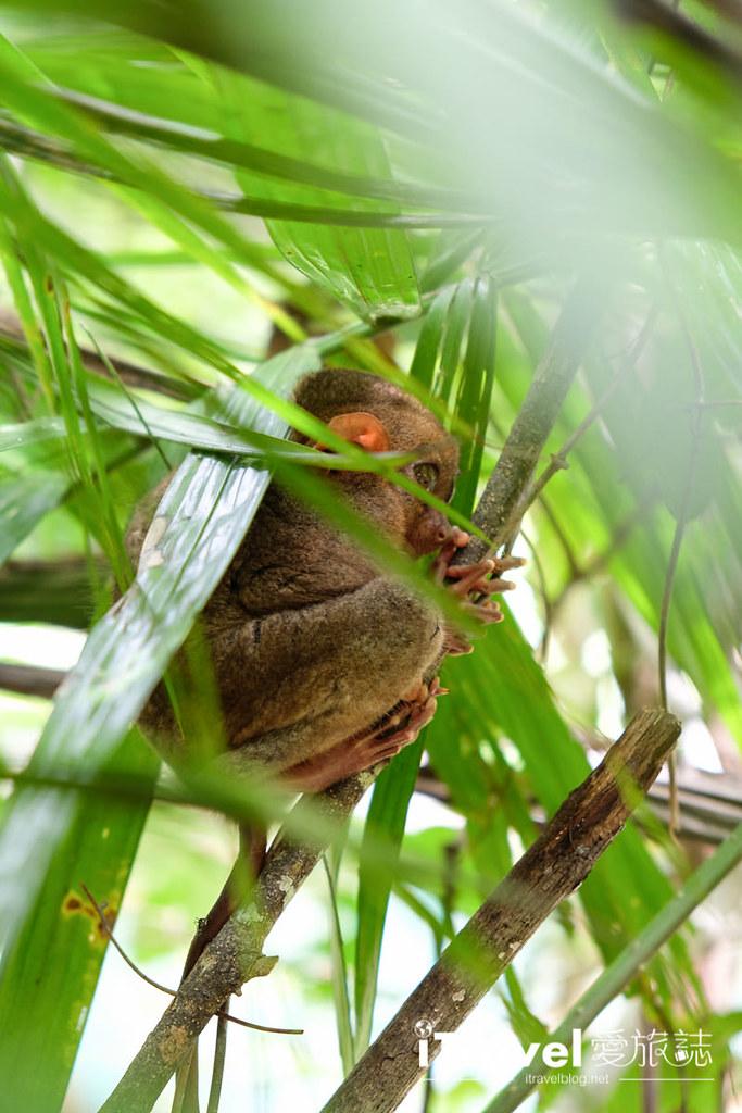 菲律宾薄荷岛眼镜猴保育中心 Tarsier Sanctuary (22)