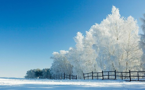 Snow Wallpapers 1