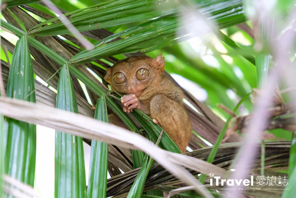 菲律宾薄荷岛眼镜猴保育中心 Tarsier Sanctuary (18)