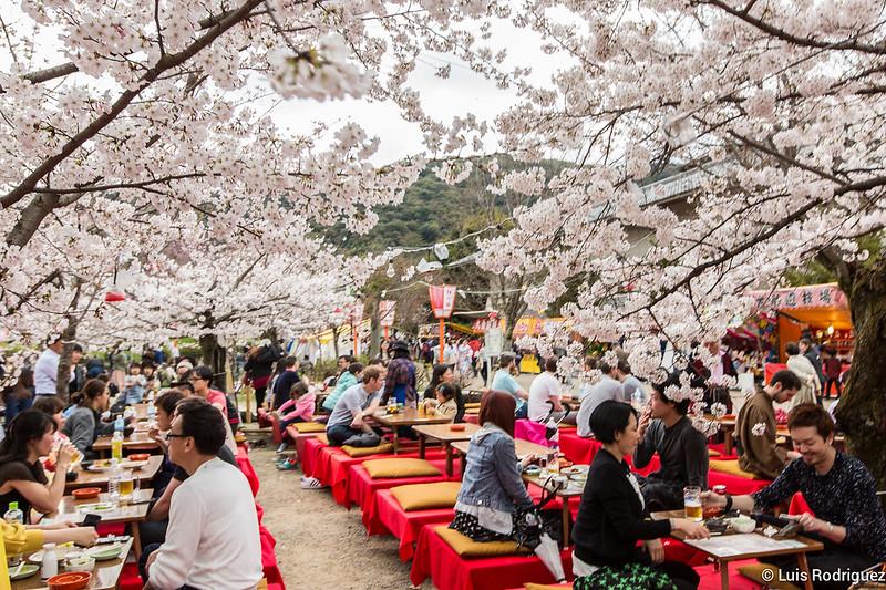 Poteaux sous les cerisiers en fleurs dans le parc Maruyama de Kyoto