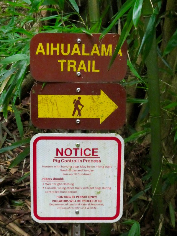Picture from the Aihualama Trail