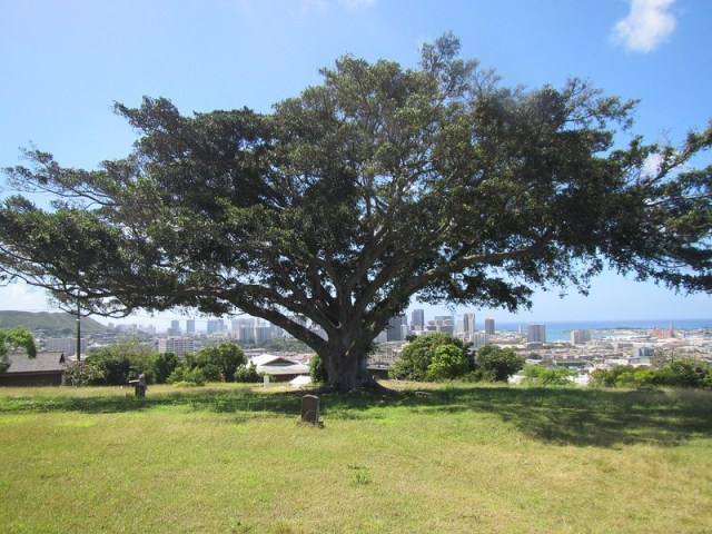 Picture from Puukamalii Cemetery