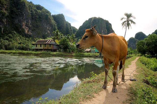 Kampung Berua at Rammang-Rammang Karst