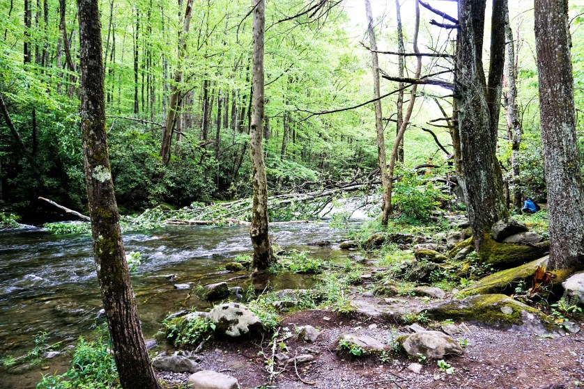 Great Smoky Mountains National Park - Sugarlands Distilling Blogger Trip, Gatlinburg, Tenn., May 5 -7, 2017