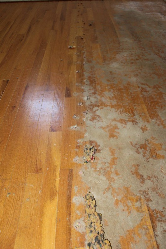 From Old Carpet To Hardwood Floor Terrific Broth