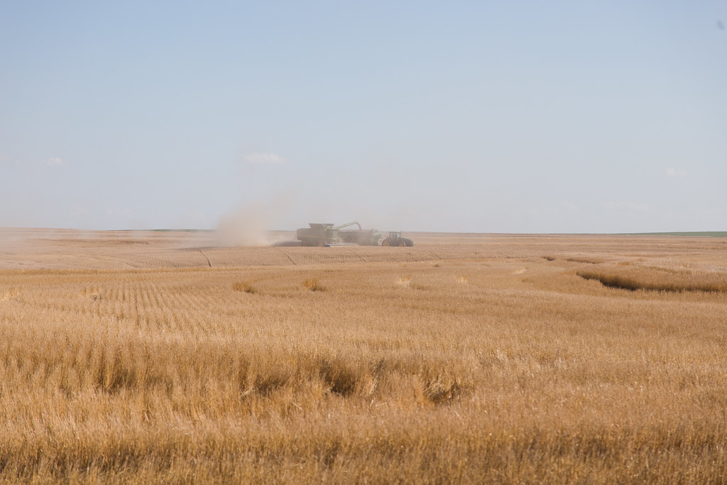 High Plains Harvesting (Laura)