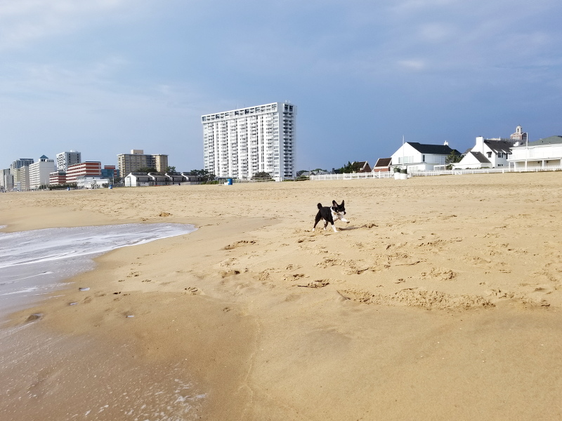 oceanfront-virginia-beach-louis-beagle-dog-6