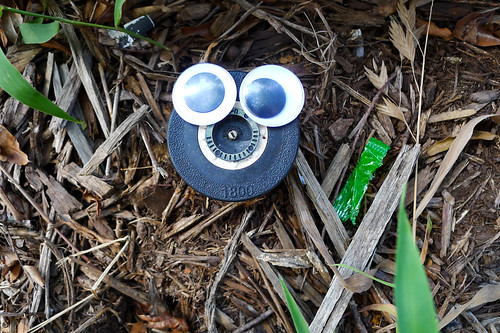 Googly-Eye Bombing Downtown Greenville-111