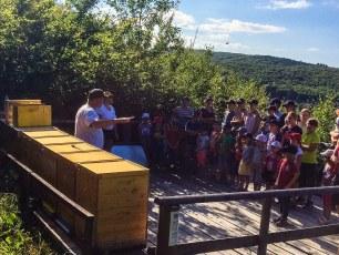 Familiensommer 2017 - offener Bienenstock