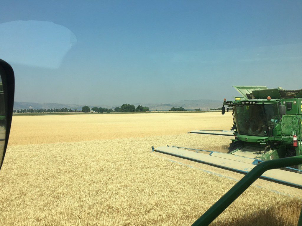 High Plains Harvesting 2017 (Willem)