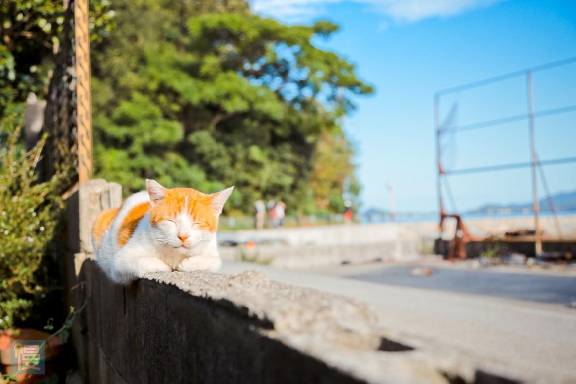 貓島男木島 瀨戶內海跳島旅行 2016-616