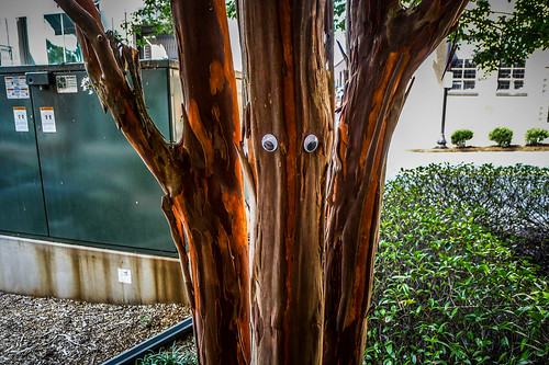 Googly-Eye Bombing Downtown Greenville-91