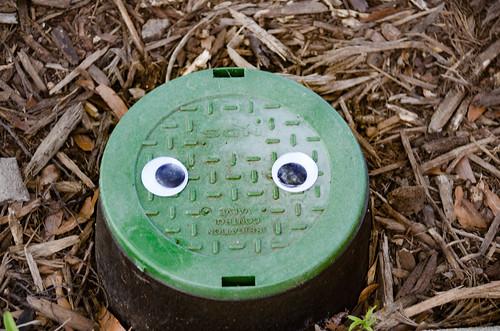 Googly-Eye Bombing Downtown Greenville-71