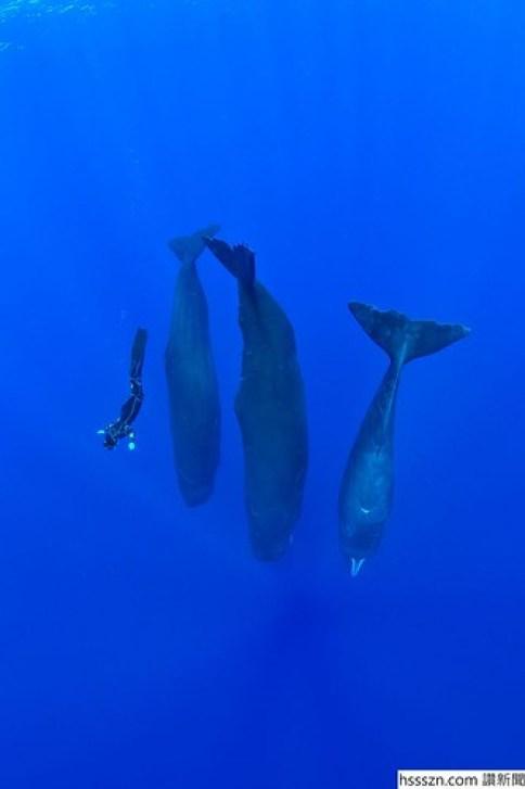 sperm-whales-sleep-franco-banfi-10-5968932e381b8__700_700_1050