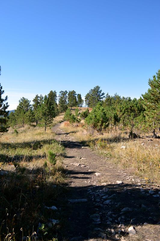 Blackhills National Forest