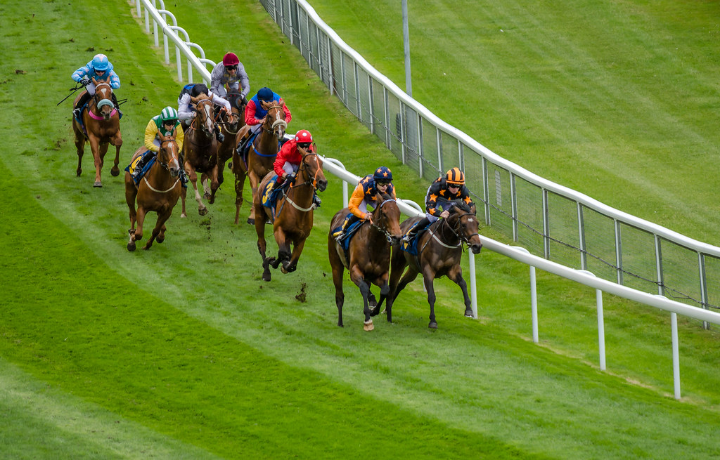 Chester races, what's on in chester