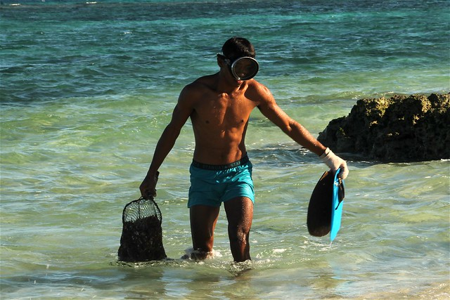Collecting Sea Urchins