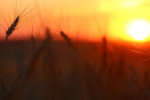 Dreamy sunset.