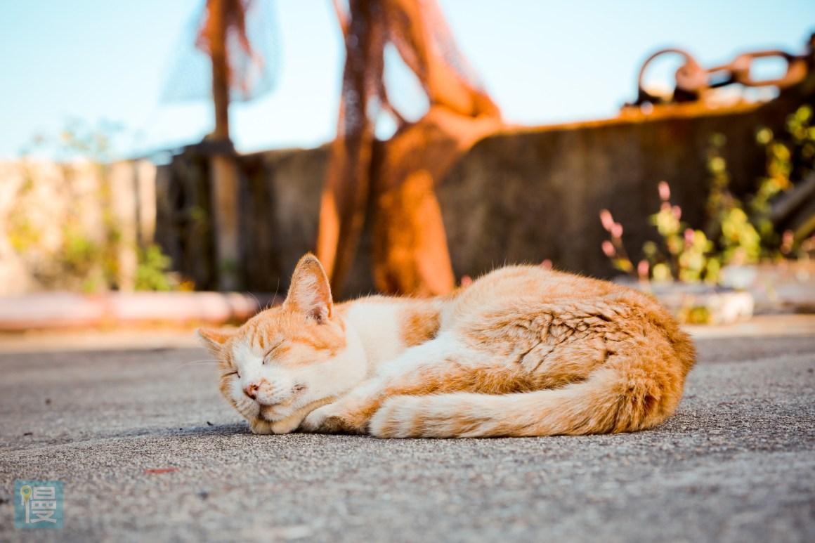 貓島男木島 瀨戶內海跳島旅行 貓咪