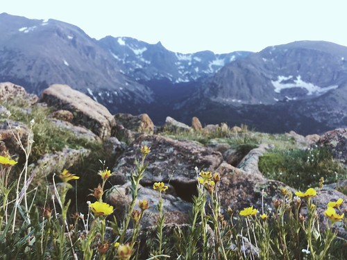 Wildflowers and moutains.