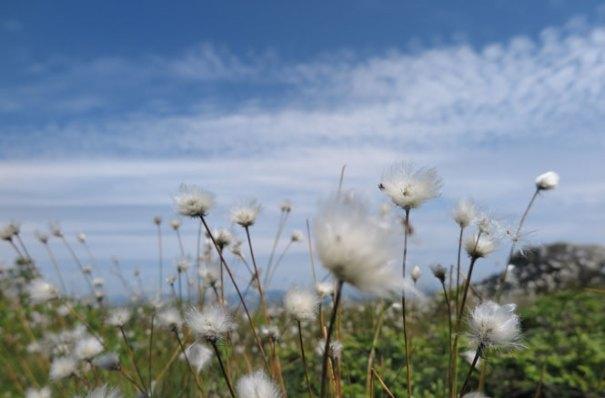 Saddleback Flowers
