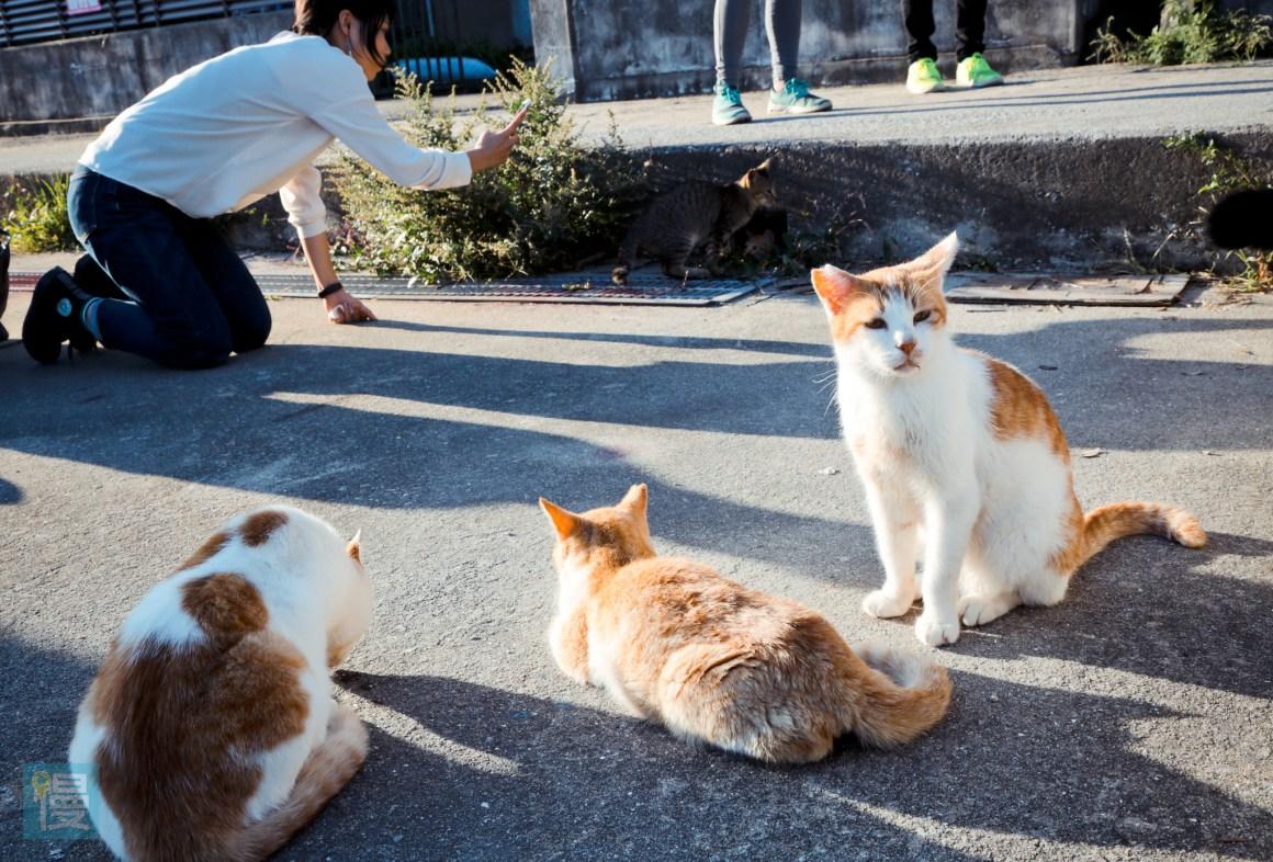 貓島男木島 瀨戶內海跳島旅行 2016-645