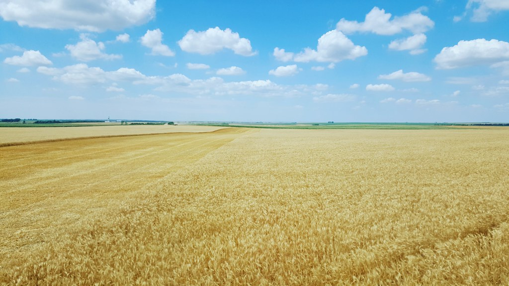 Schemper 2017 - South Dakota Wheat Harvest