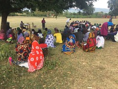 A self-organized field day led by the extension agents underway in Babati District. Photo credit: Job Kihara/CIAT
