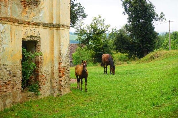 Criț horses