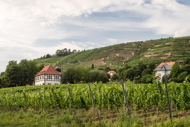 Hoflößnitz