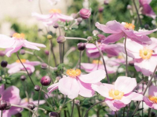 oxford_botanic_garden_11
