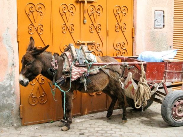 Reparto en Marruecos