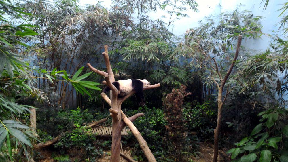 Singapore Zoo 11_zpscqyfu8om