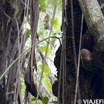 Viajefilos en la Amazonia, Peru 047